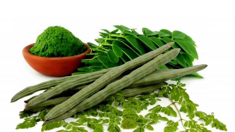 Moringa: The health benefits of this plant are unbelievable
